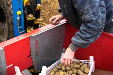 Frühkartoffeln legen
